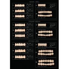 """Зуби акрилові """"Аніс ЕКСПЕРТ"""" (планка 6 зубів) фронтальні"""